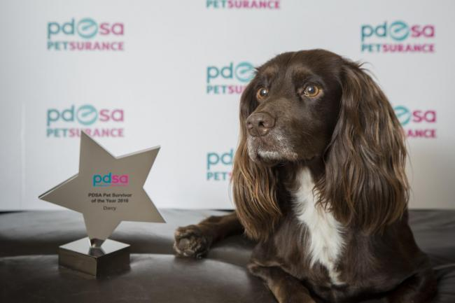 Darcy with her PDSA Pet Survivor trophy