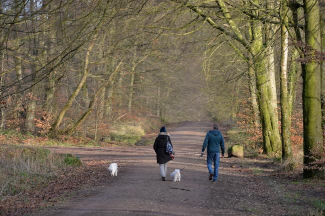 Dog walkers giving their furry friends some exercise