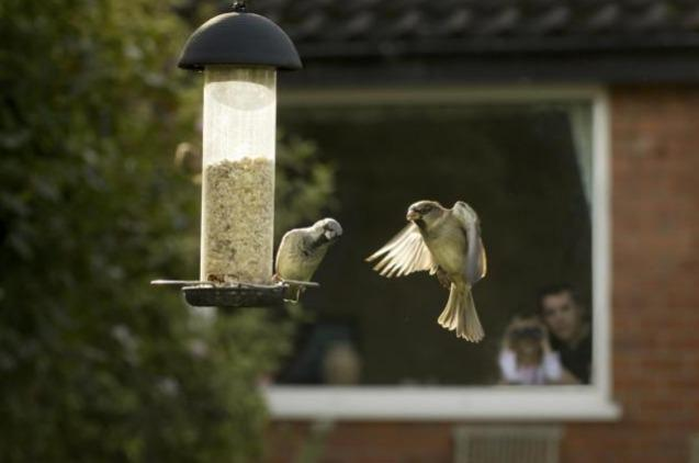 The RSPB Big Garden Bird Watch takes place this weekend
