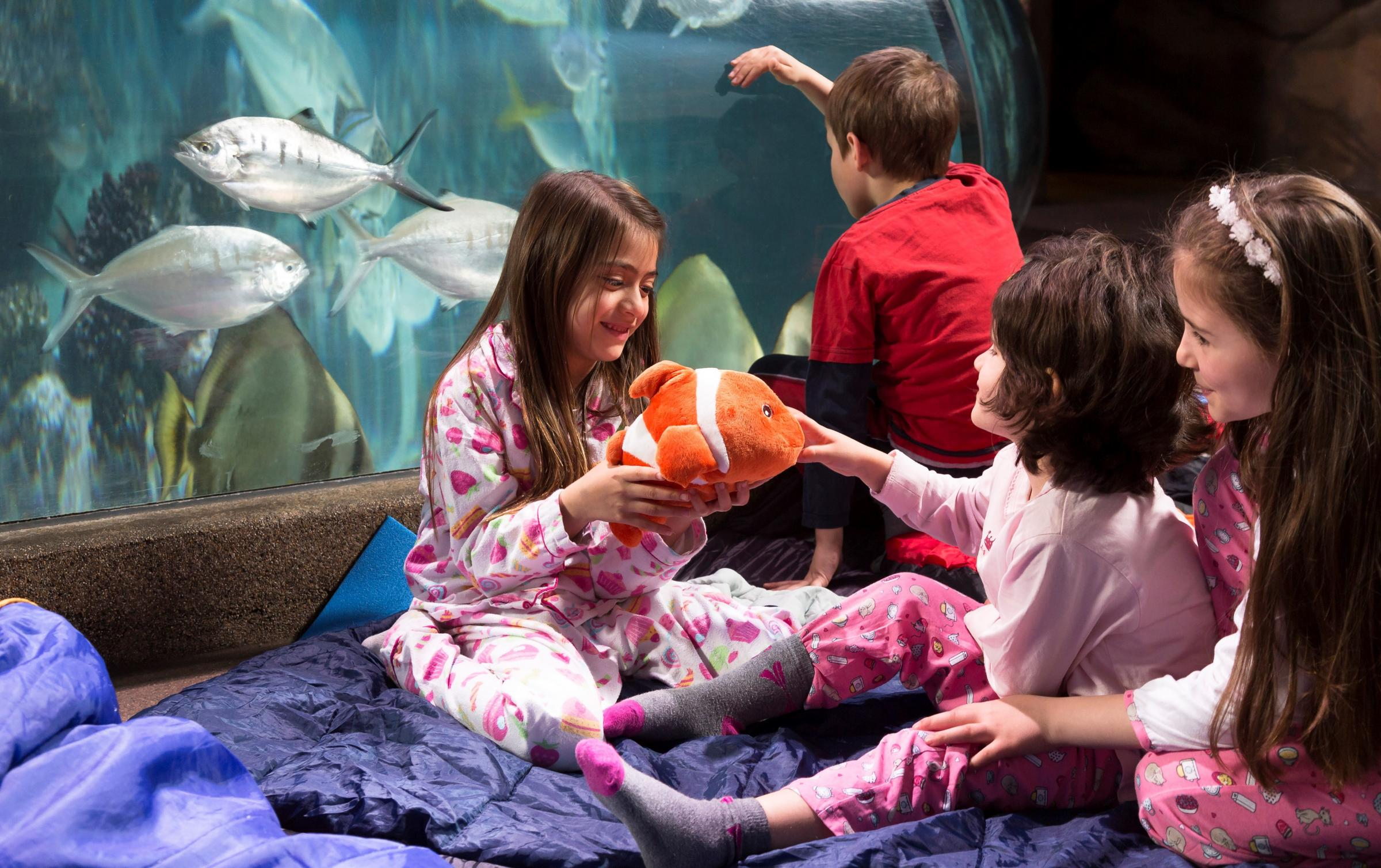 Children will have great fun at underwater sleepovers